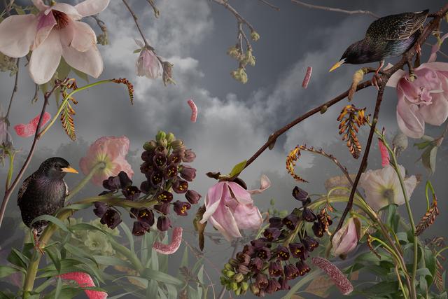 Jason DeMarte, 'Invasive Apathy', 2018, Richard Levy Gallery