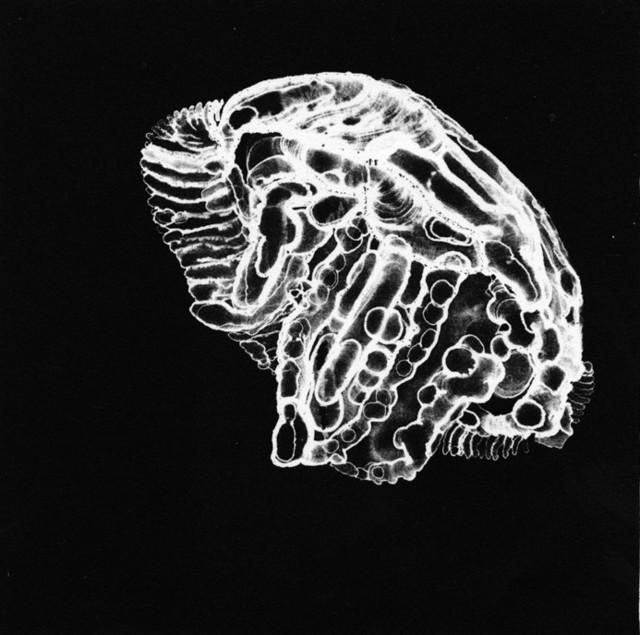 , 'Moon Jellyfish,' 2003, InLiquid