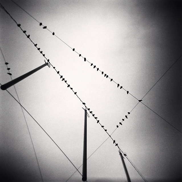 , 'Fifty Two Birds, Zurich, Switzerland,' 2008, Robert Mann Gallery