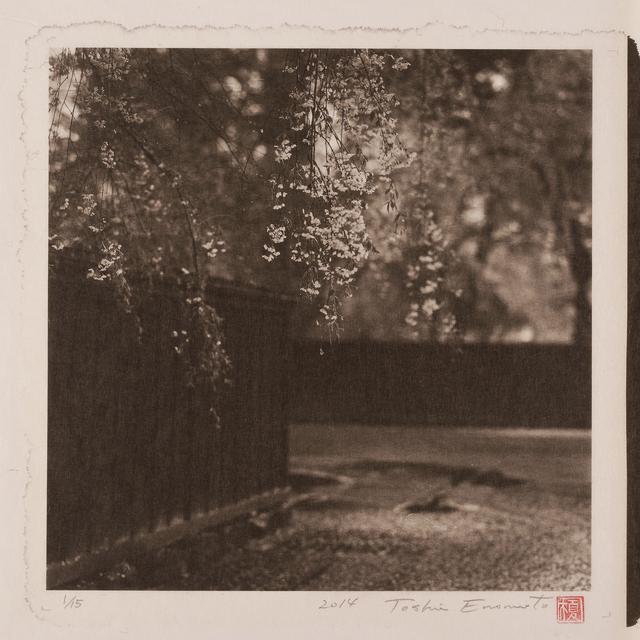 , 'Shidare-Zakura in a samurai Residence Garden, Kakunodate, Akita,' 2014, Micheko Galerie