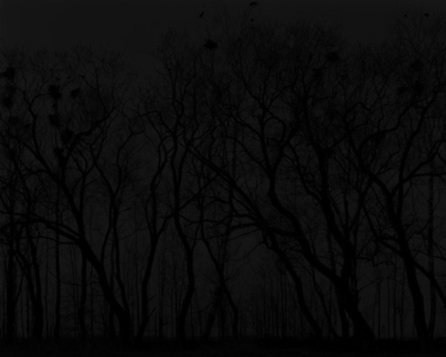 , 'Trees at night,' 2011, Christophe Guye Galerie