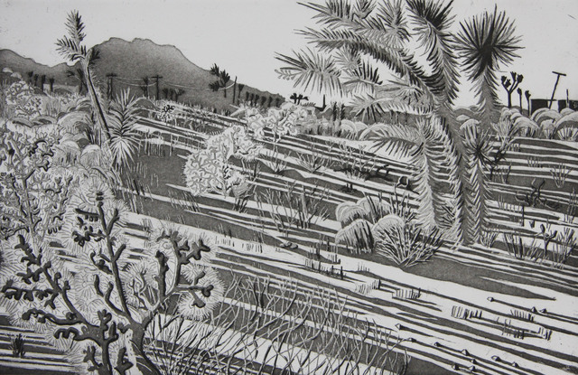 Kate Crook, 'Joshua Tree #5', 2017, Print, Lithograph, edition 50, Somerset White paper, acid free, Asher Grey Gallery