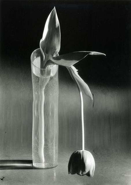 , 'Melancholic Tulip, February 1939,' 1939, Bruce Silverstein Gallery