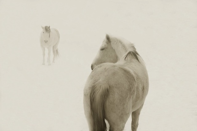 Jack Spencer, 'Snow Ponies 2 8/20', Gail Severn Gallery