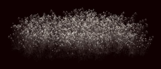 , 'Echinacea,' 2014, Miller Yezerski Gallery