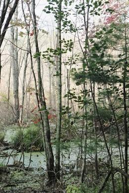 , 'Beaver Swamp, Fall #3,' 2013, 555 Gallery