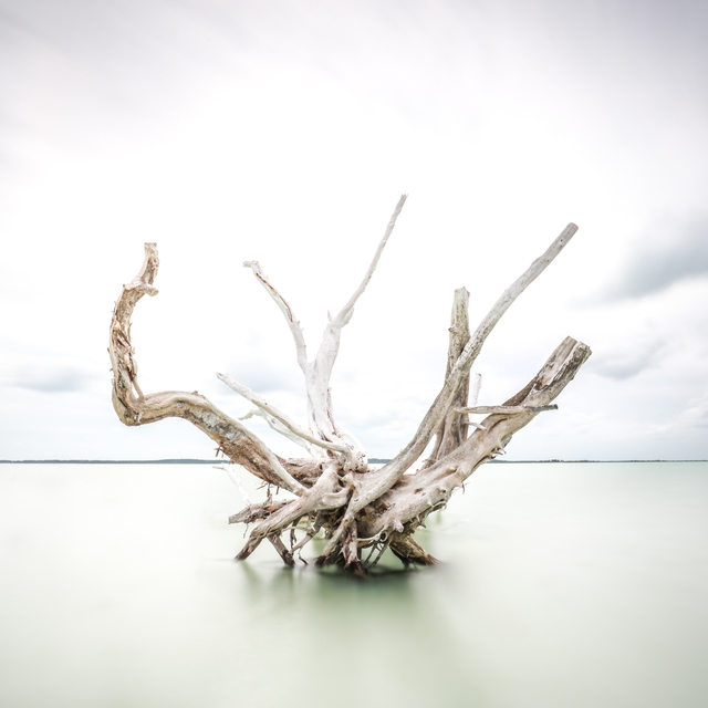 , 'Driftwood at Harbor Island,' 2019, THE WHITE ROOM GALLERY