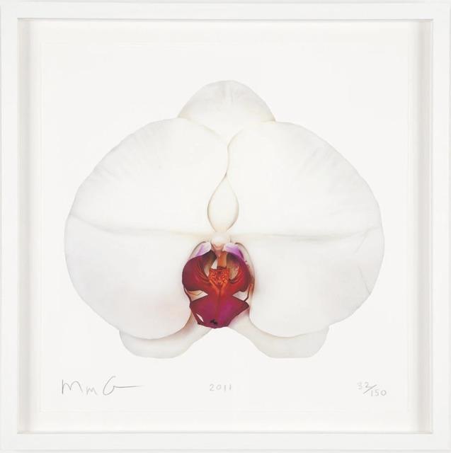 Marc Quinn, 'White Orchid', 2011, Artsnap