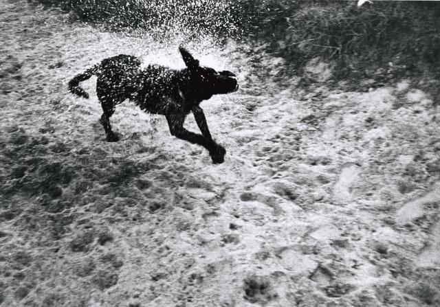 , 'Dog #9,' , Galerie Peter Sillem