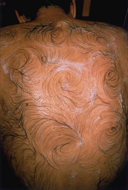 , 'Van Gogh's Back,' 1995, Galerie Chantal Crousel