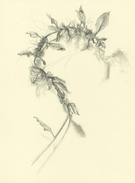 , 'Pennyroyal,' 2014, Resource Art