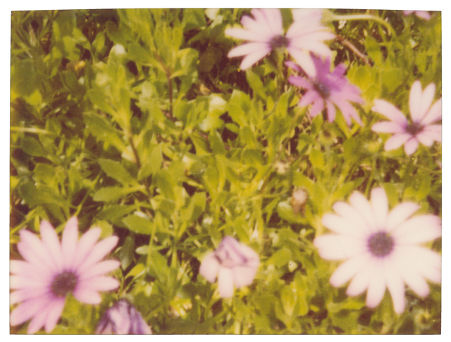 Stefanie Schneider, 'Artificial Flowers', ca. 1999, Photography, Analog C-Print, hand-printed by the artist on Fuji Crystal Archive Paper, matte surface, based on an expired Polaroid, Instantdreams