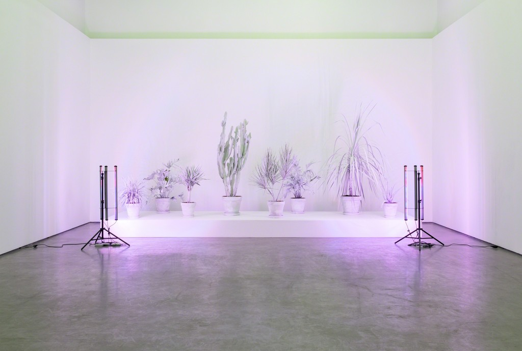 Andrew Dadson, 'House Plants', 2017, installation view from 'Site For Still Life', Contemporary Art Gallery, Vancouver, 2017. Courtesy the artist, David Kordansky Gallery and Galleria Franco Noero. Photography by SITE Photography