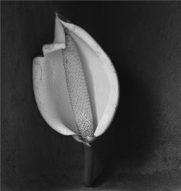 , 'Pinanona,' 2000, Patricia Conde Galería