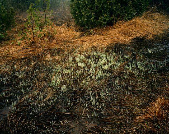 , 'Grasses, Bruce Peninsula, Ontario,' 1981, Bryce Wolkowitz Gallery