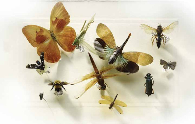 Laurie Rubin, 'Assorted Insects', Chicago Art Source