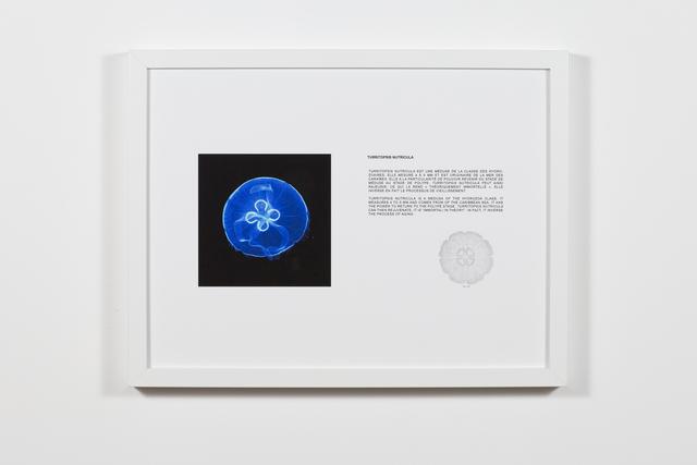 , 'Tarritopsis Nutricula,' 2018, Art Mûr