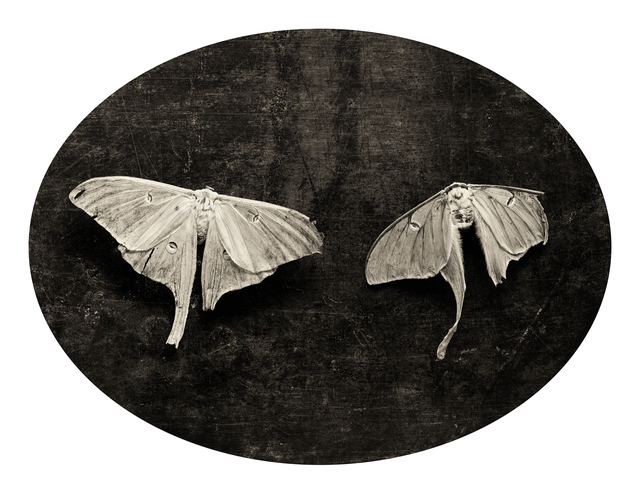 , 'Soulmate Moths,' 2003, SOCO GALLERY