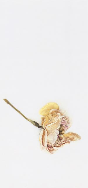 Craigie Horsfield, 'Peony, New York, June 2003', 2005, Photography, Dry print, Monica De Cardenas