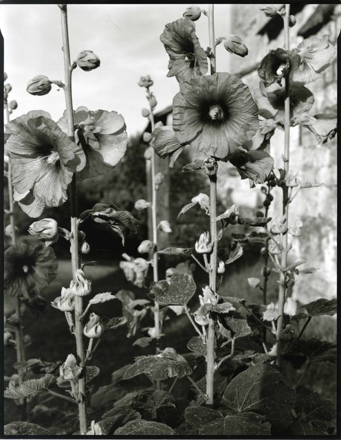 , 'Savignac de Miremont, France,' 2011, Pace/MacGill Gallery