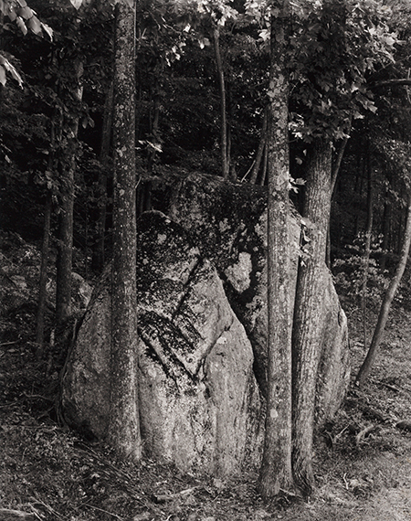 , 'Stone and Tree, Blue Ridge, VA,' 1965, Pucker Gallery