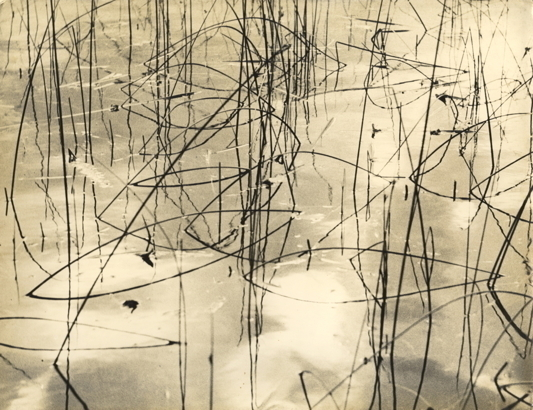 ", '""Untitled (Grass in Water),' ca. 1950, Kicken Berlin"