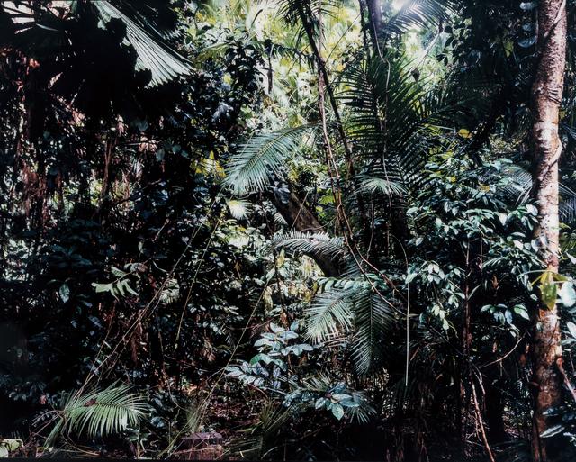 Thomas Struth, 'Paradise 6, Daintree/Australien', 1998, Phillips