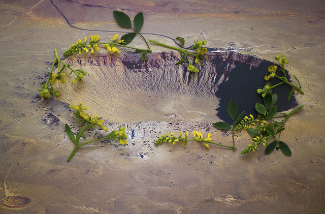 , 'Ruta graveolens i.a. - Barrington crater, Arizona U.S.A. ,' 2015, Seelevel Gallery