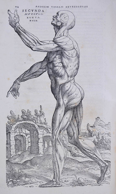 , 'De humani corporis fabrica libri septem.,' June-1543., Shapero Rare Books Limited