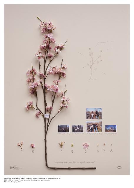 , 'Cherry Blossom - Herbario de Plantas Artificiale,' 2014, Instituto de Visión