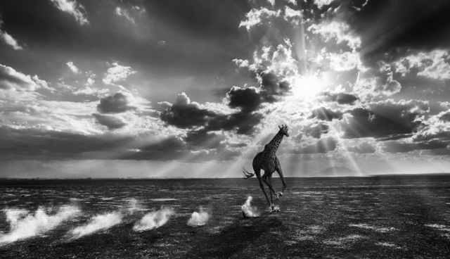 David Yarrow, 'Heaven Can Wait', 2014, Photography, Archival Pigment Print, Hilton Asmus
