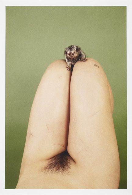 , 'Marmoset (LSD),' 2012, Studio Voltaire