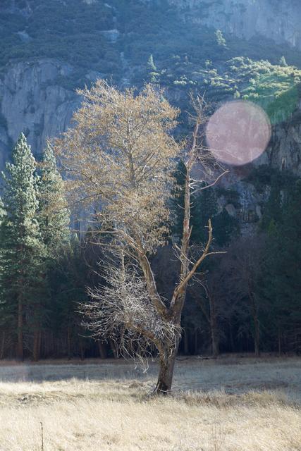 , 'Tree,' 2015, Lehmann Maupin