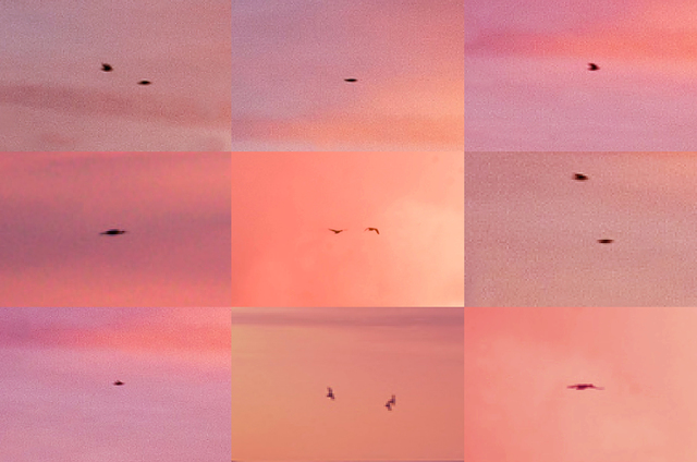 Penelope Umbrico, 'Suns from Sunsets from Flikr - Outtakes/ Birds (Pink)', 2018, David B. Smith Gallery
