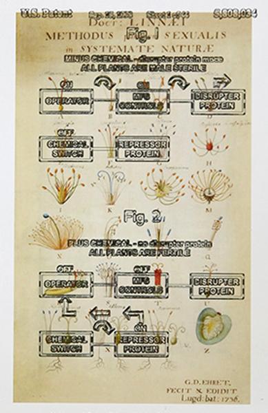 , 'Systema Naturae (Linnaeus: 1736).......,' 2017, Umberto Di Marino