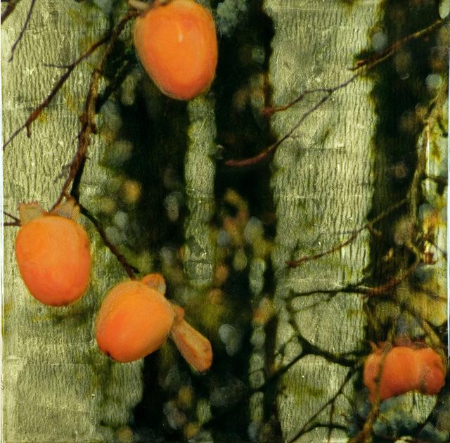 , 'Persimmons - Pengrove 1,' 2010, Gallery Henoch