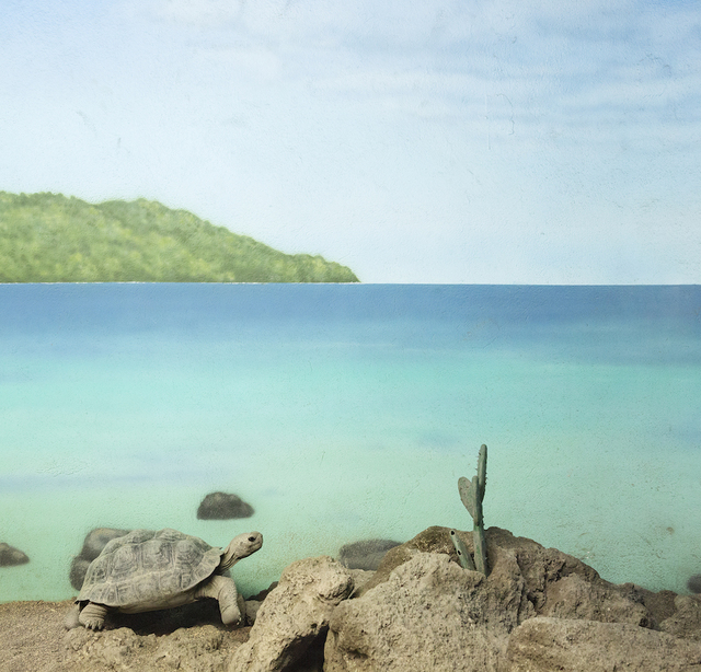 , 'Turtle and Blue Sea,' 2015, Galerie Dumonteil