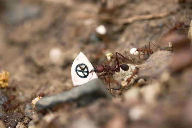 Donna Conlon, 'Coexistence (ant with peace flag)', 2008, Diablo Rosso