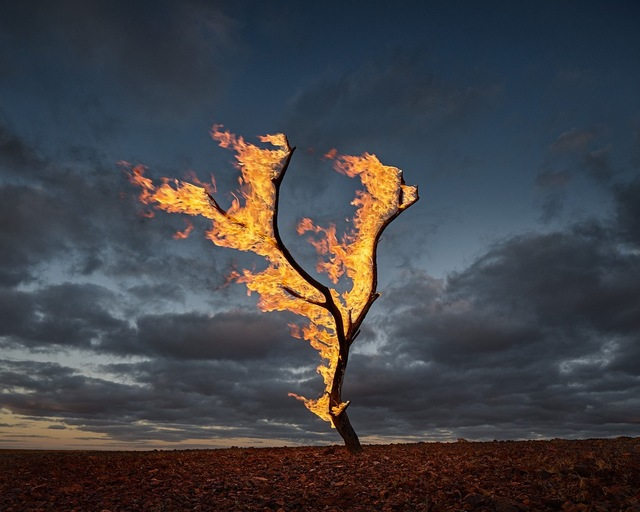 , 'Burning Tree Allandale Station,' 2015, ARC ONE Gallery