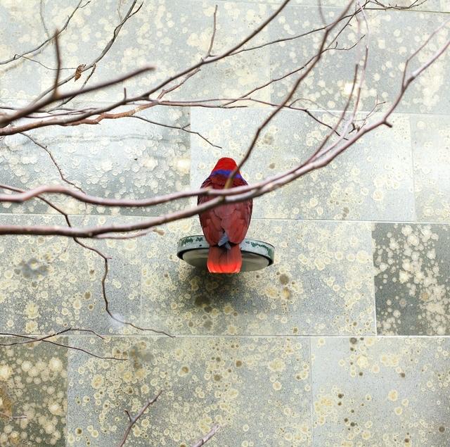 , 'Red Bird,' , Galerie Dumonteil