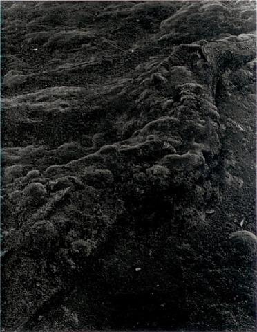 Balthasar Burkhard, 'Moos (from Japan)', 1987, CHRISTOPHE GUYE GALERIE