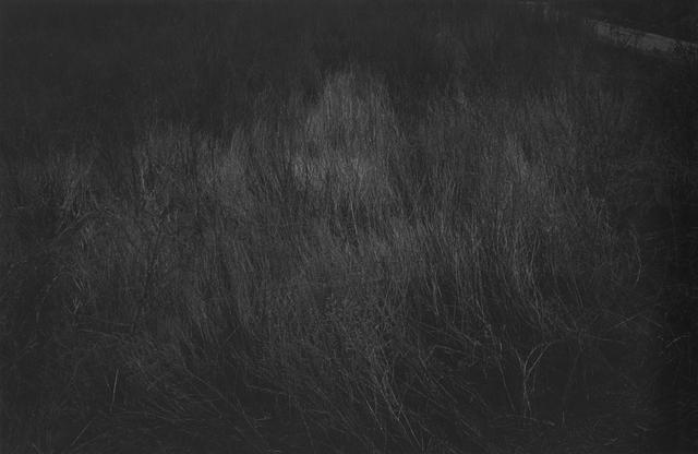 , 'Branch,' 1997, MIYAKO YOSHINAGA
