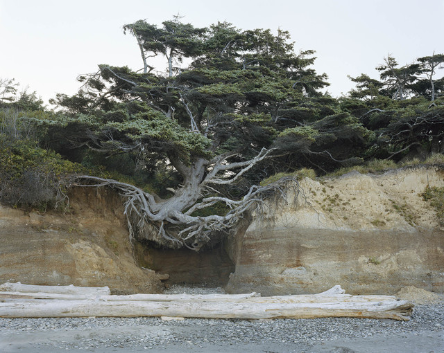 ", '""Tree of Life"" Tree Root Cave, Kalaloch, Olympic National Park, Washington 2017,' 2017, Sikkema Jenkins & Co."