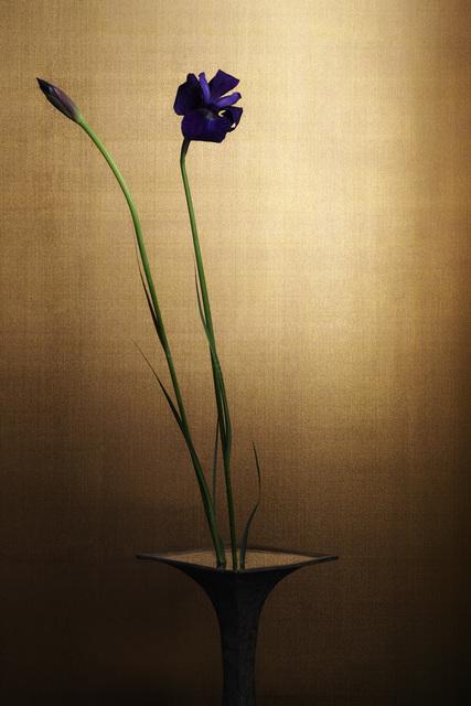 , 'japanese iris,' 2017, Galerie Marie-Robin