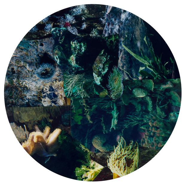 , 'Hybrida 7,' 2014, Galerie Nikolaus Ruzicska