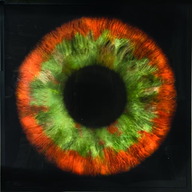 , 'Iris Flowers,' , Eden Fine Art