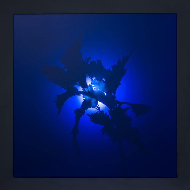 , 'Reborn Tree: Into the Shadow 1,' 2015, Yiri Arts