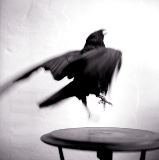 , 'Raven,' 1996, Catherine Couturier Gallery