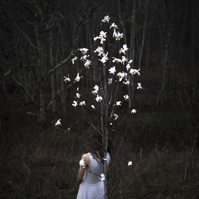 , 'Magnolia Tree, Rockport, Maine,' , Dowling Walsh