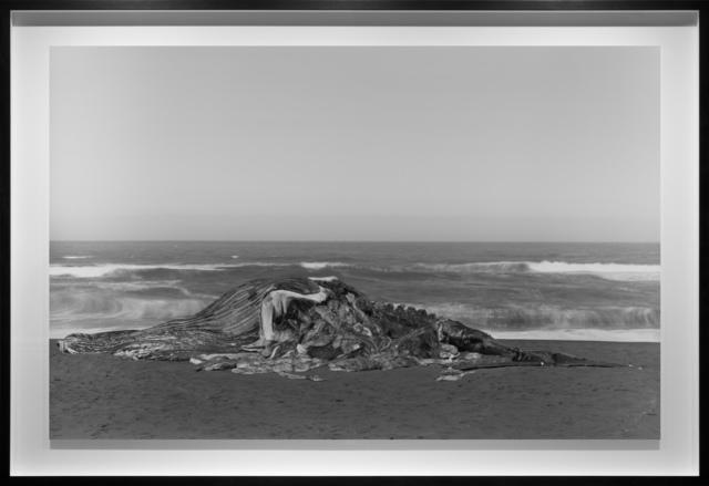 , 'Whale, Pacifica,' 2015, Fraenkel Gallery